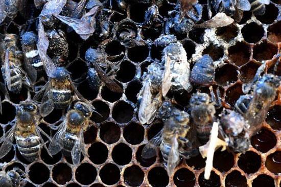 آنچه اقتصاددانان باید از زنبورها یاد بگیرند