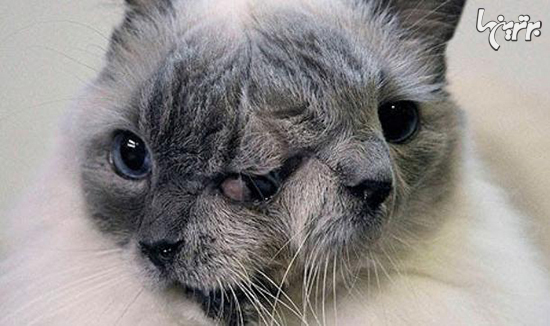 جهشهای ژنتیکی عجیب و ترسناک در دنیای حیوانات