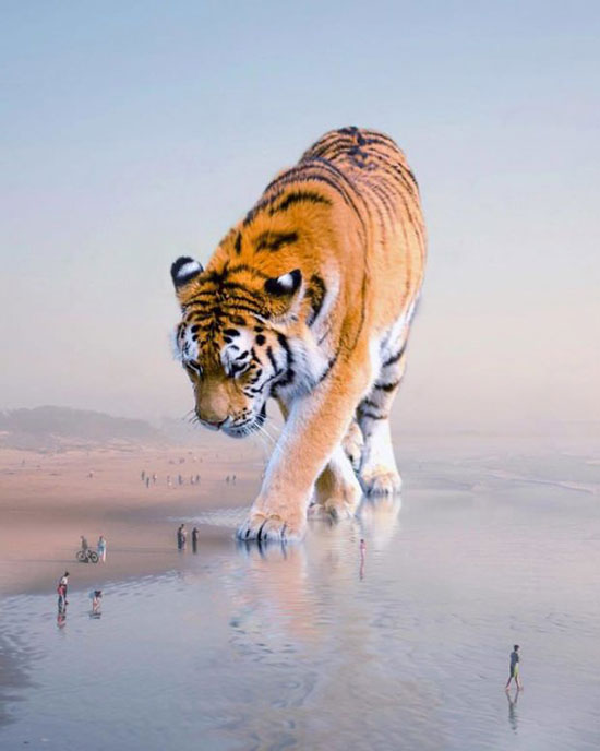 تصاویر هنری و فوقالعاده زیبا از حیوانات عظیم الجثه