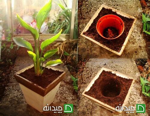 تعویض گلدان در خانه، لباس نو برای گیاهان آپارتمانی!