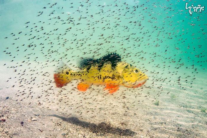 تصاویر شگفت انگیز از حیات زیر آب