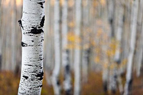 ۸ نکته برای عکاسی از طبیعت پاییزی