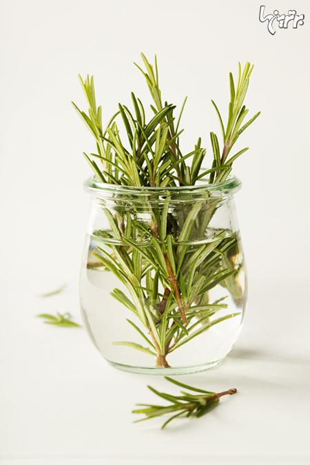گلها و سبزیجاتی که تنها با یک لیوان آب میتوانید پرورش دهید!
