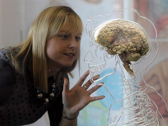 باورهای رایج، اما غلط درباره مغز انسان!