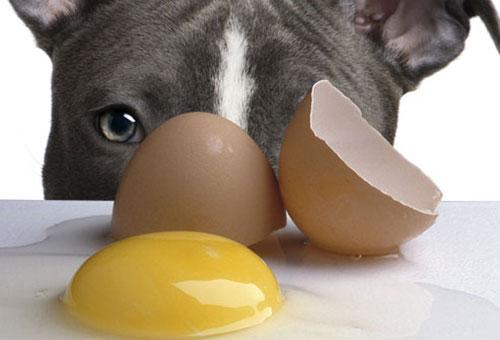 غذاهایی که برای سگ ها خطرناک است